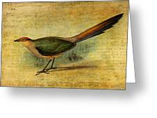 The Cuckoo's Note Greeting Card