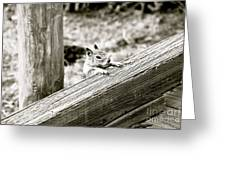 The Curious Squirrel Greeting Card