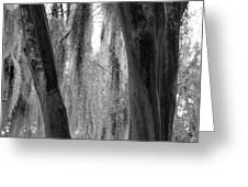 Cypress In The Bayou Greeting Card