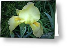 The Dainty Side Of An Iris Greeting Card