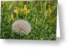 The Dandelion  Greeting Card
