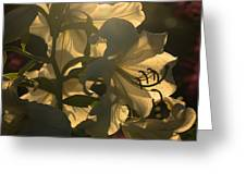 The Dark Accentuates The Light Greeting Card