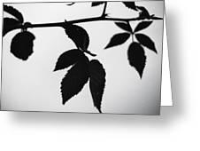 The Darkest Leaf Greeting Card
