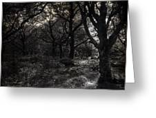 The Deep Forest Greeting Card