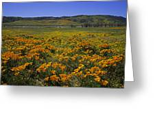 The Desert In Bloom Greeting Card