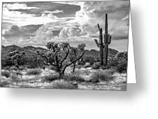The Desert Speaks Greeting Card