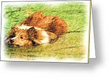 The Dog Paddle Greeting Card