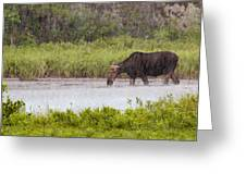 The Downpour Greeting Card