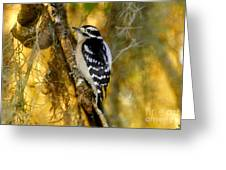 The Downy Woodpecker Greeting Card