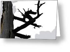 The Dragon Tree Greeting Card