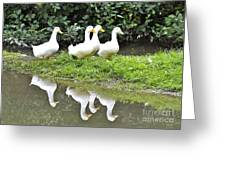 The Duck Gang Greeting Card
