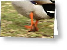 The Duck Strut Greeting Card