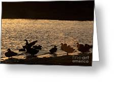 The Ducks  Greeting Card