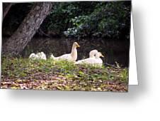 The Ducks Greeting Card