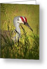 The Duo - Two Sandhill Cranes Greeting Card