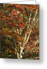 The Dying Leaves' Final Passion Greeting Card