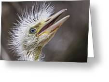 The Eager Great Egret Chick Greeting Card