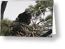 The Eagle Eye Greeting Card