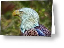 The Eagle Look Greeting Card