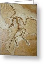 The Earliest Bird, Archaeopteryx Greeting Card by Jason Edwards