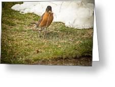 The Early Bird - Robin - Casper Wyoming Greeting Card