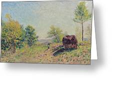 The Edge Of The Forest Greeting Card