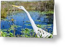 The Egret And The Dragonfly Greeting Card
