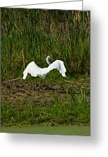 The Egret Has Landed Greeting Card
