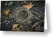 The Empty Nest Greeting Card