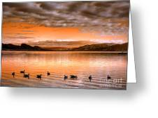 The Evening Geese Greeting Card