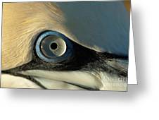 The Eye Of A Northern Gannet Greeting Card