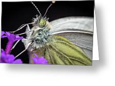 The Eye Of The Green-veined Butterfly. Greeting Card