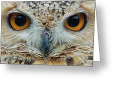 The Eyes Have It Greeting Card