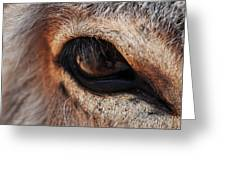 The Eye Of A Burro Greeting Card
