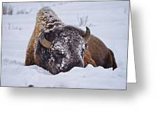 The Face Of Cold Greeting Card by Greg Norrell