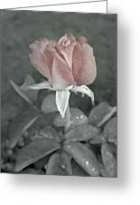 The Faded Rose Greeting Card
