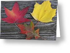 The Fallen Leaves Of Autumn Greeting Card