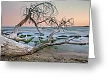 The Fallen Tree Greeting Card