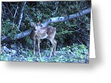The Fawn Greeting Card