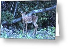 The Fawn II Greeting Card