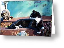 The Ferals-1399 Greeting Card