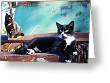 The Ferals-1400 Greeting Card