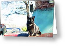 The Ferals-1402 Greeting Card