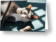 The Ferals-1407 Greeting Card