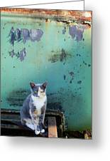The Ferals-1420 Greeting Card