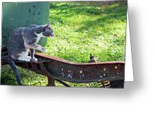 The Ferals-1424 Greeting Card