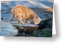 The Ferals-1451 Greeting Card
