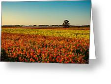 The Field Of Flowers Greeting Card