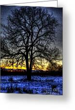 The Field Tree Hdr Greeting Card