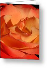 The Final Rose Of Summer Greeting Card